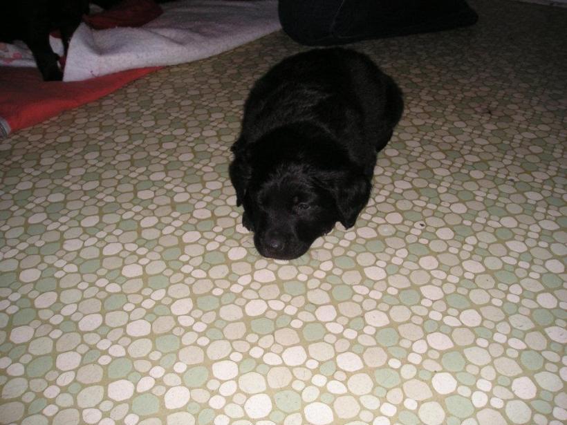baby Jack - November 2003